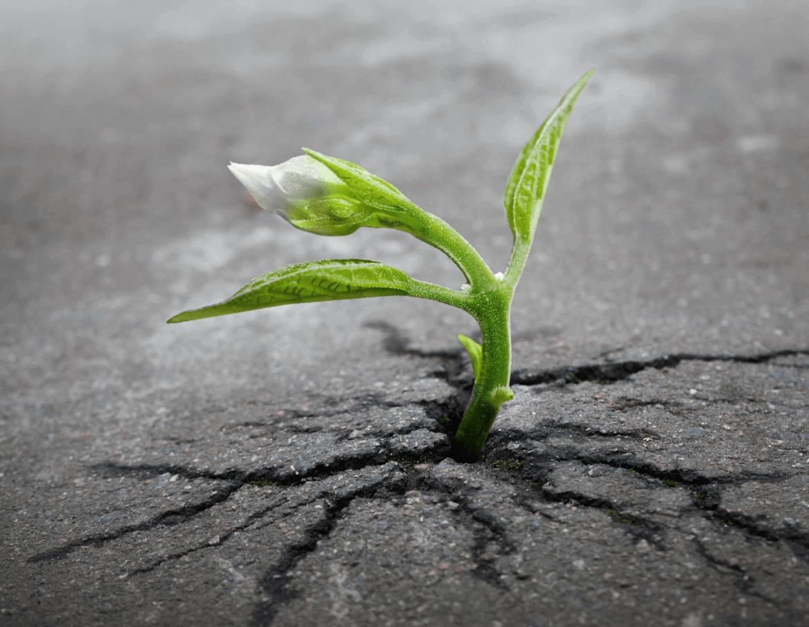 fiore che sboccia nelle difficoltà